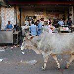 Seorang Muslim Tewas Dikeroyok Ratusan Warga Hindu saat Angkut Sapi