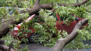 Ibukota Rusia Dilanda Angin Topan, 3500 Pohon Tumbang, 14 Tewas