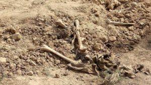 4.720 Mayat Korban Perang Irak Ditemukan di Mosul