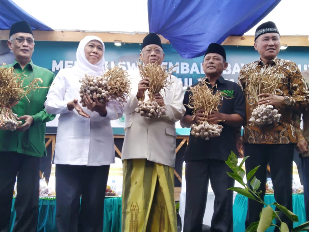 Panen Perdana Bawang Putih Pinbas MUI Jatim Dihadiri Gubernur Jatim