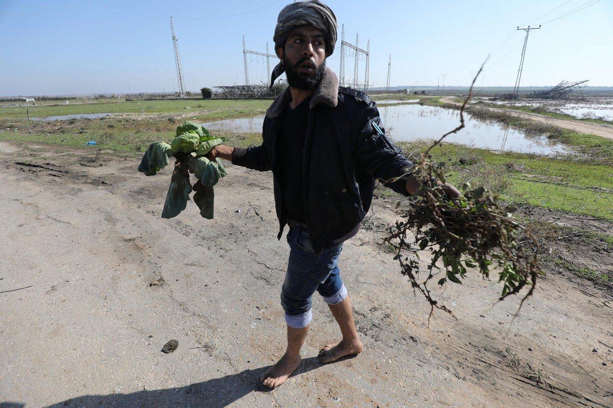 Petani Gaza: 'Israel Menghancurkan Semua Hasil Panen Kami'.