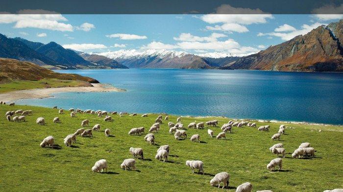 Dua Hari Berturut-turut Selandia Baru Laporkan Nol Kasus Corona